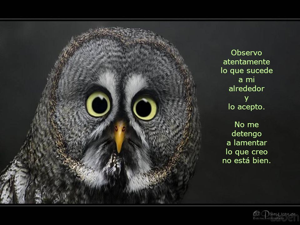 Observo atentamente lo que sucede. a mi. alrededor. y. lo acepto. No me detengo. a lamentar. lo que creo.