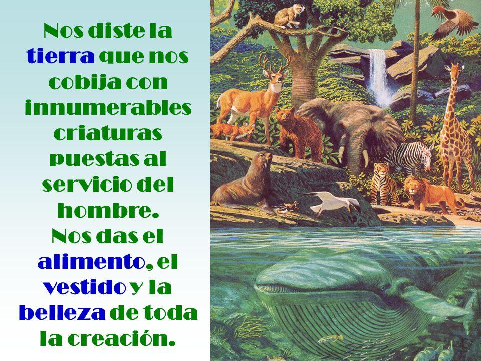 Nos diste la tierra que nos cobija con innumerables criaturas puestas al servicio del hombre.