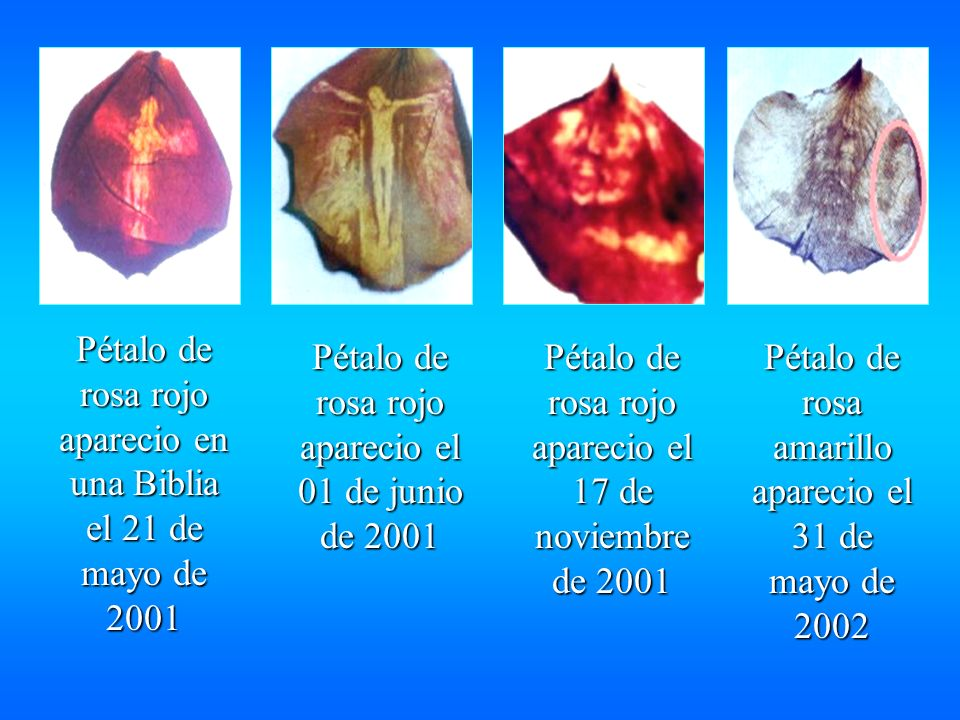 Pétalo de rosa rojo aparecio en una Biblia el 21 de mayo de 2001