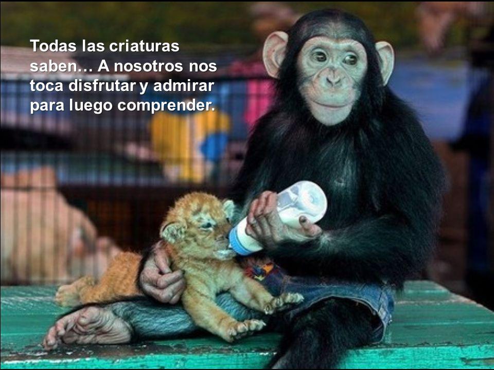 Todas las criaturas saben… A nosotros nos toca disfrutar y admirar para luego comprender.