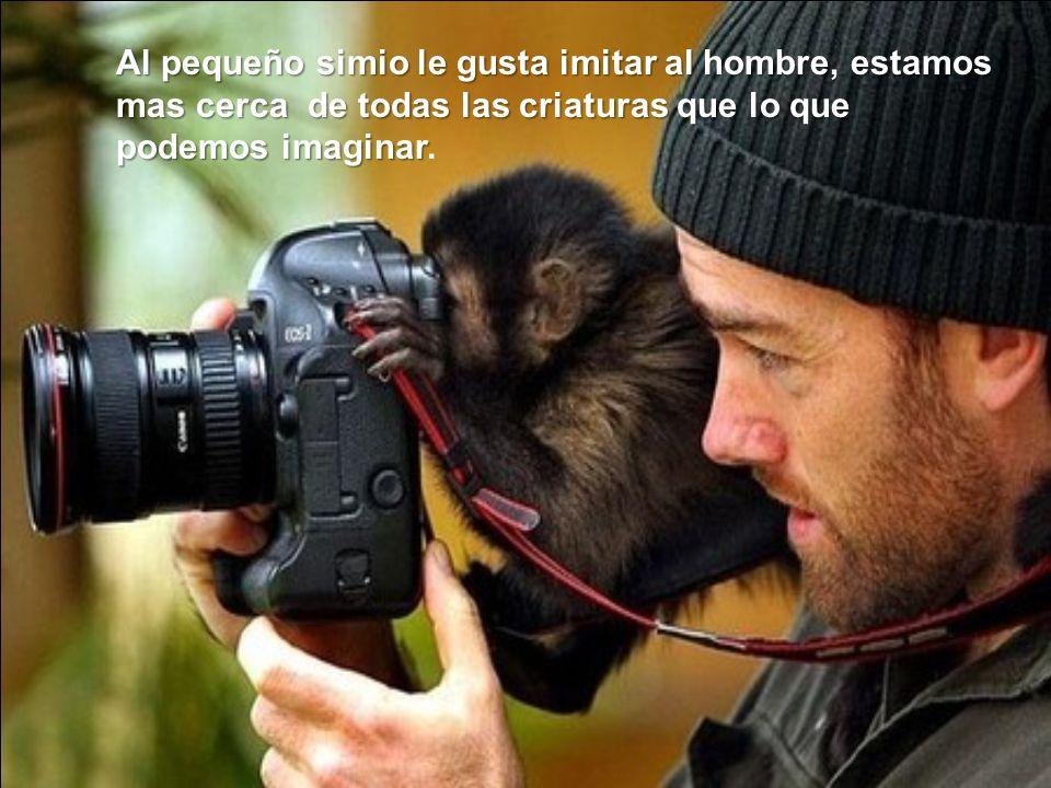 Al pequeño simio le gusta imitar al hombre, estamos mas cerca de todas las criaturas que lo que podemos imaginar.
