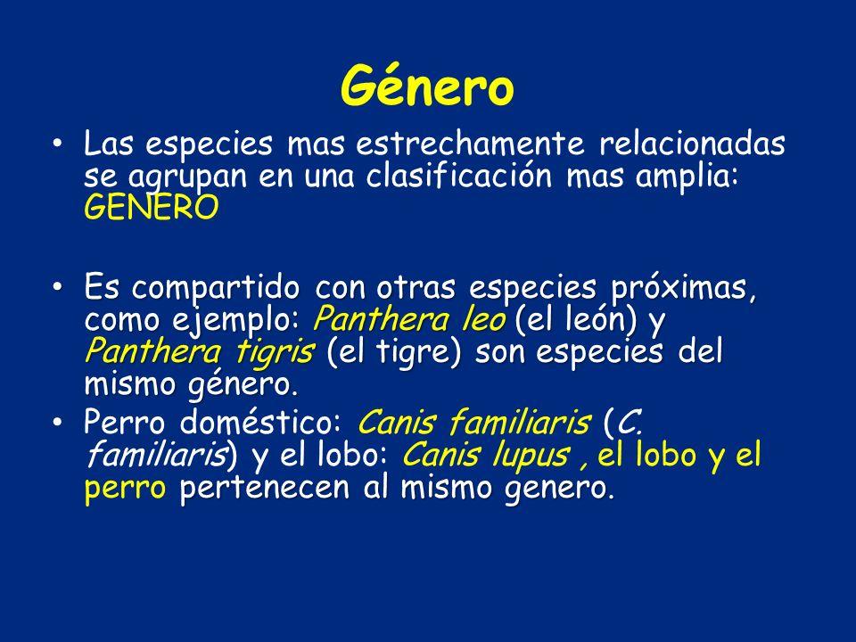 Género Las especies mas estrechamente relacionadas se agrupan en una clasificación mas amplia: GENERO.