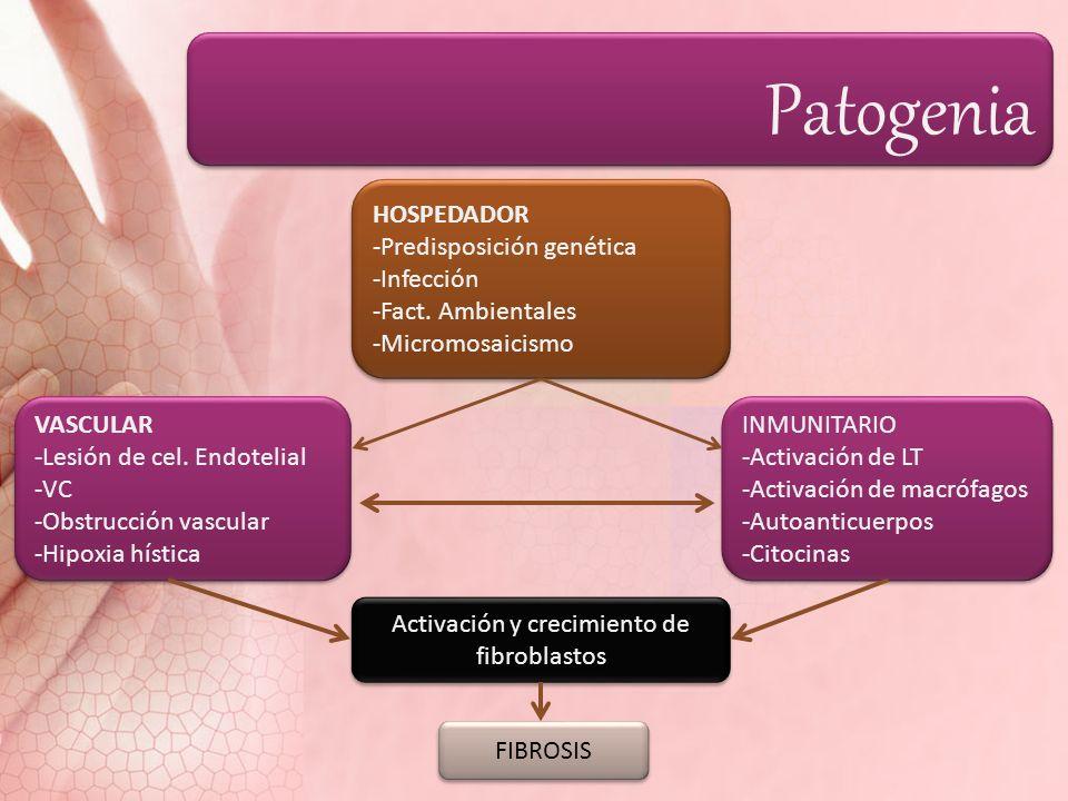 Activación y crecimiento de fibroblastos