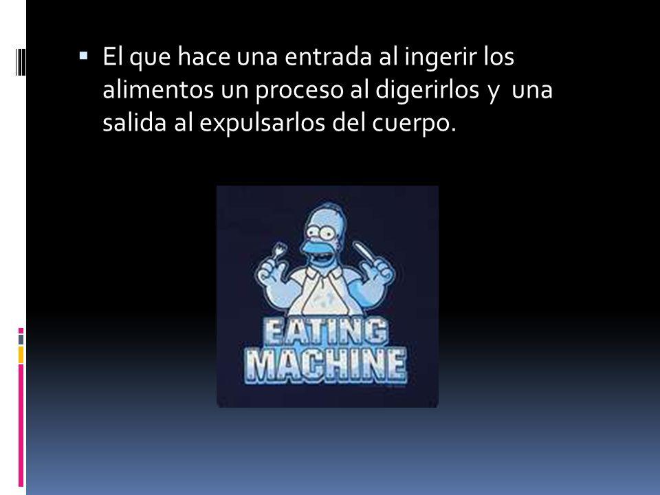 El que hace una entrada al ingerir los alimentos un proceso al digerirlos y una salida al expulsarlos del cuerpo.