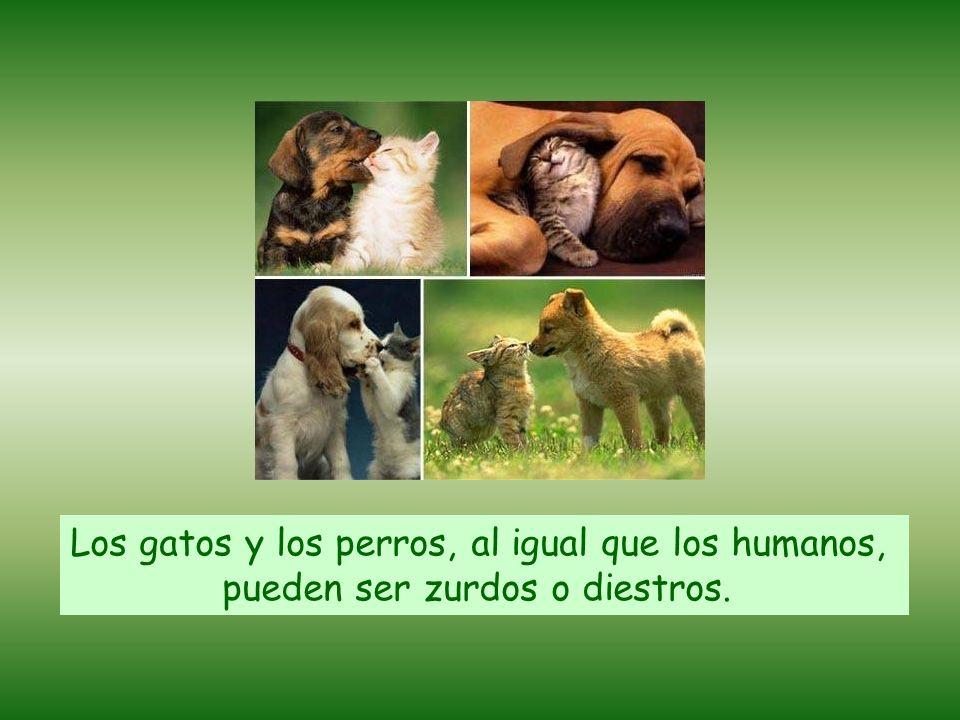 Los gatos y los perros, al igual que los humanos,
