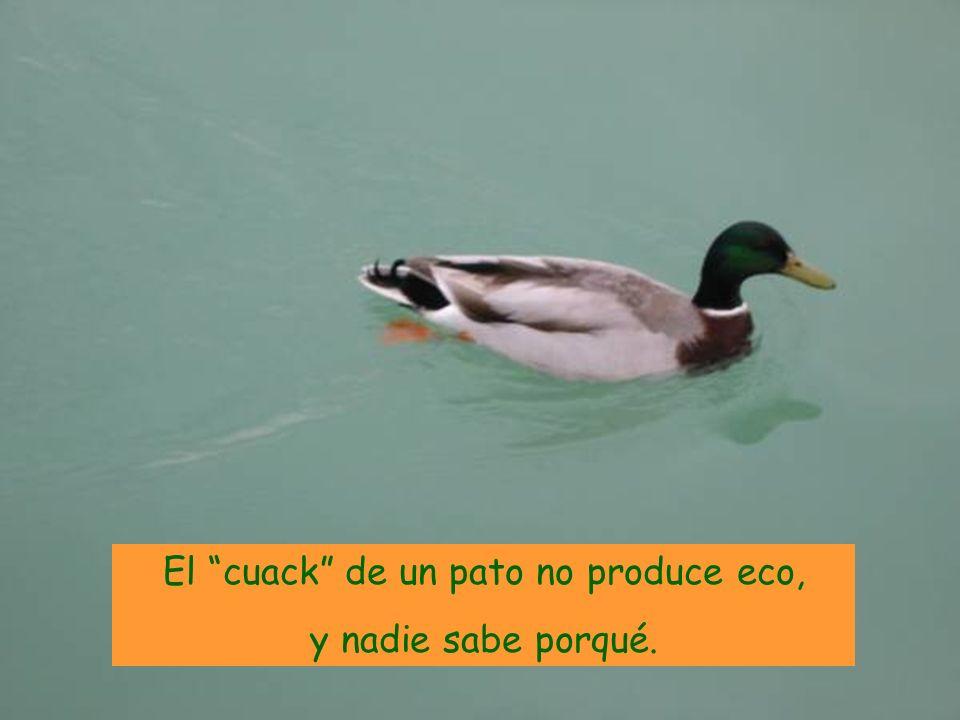 El cuack de un pato no produce eco,