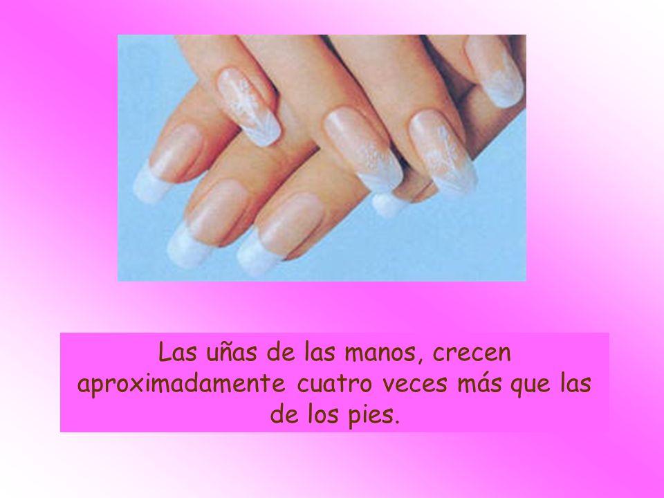 Las uñas de las manos, crecen aproximadamente cuatro veces más que las de los pies.