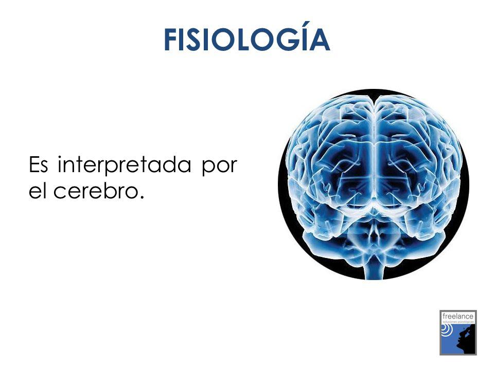 FISIOLOGÍA Es interpretada por el cerebro.