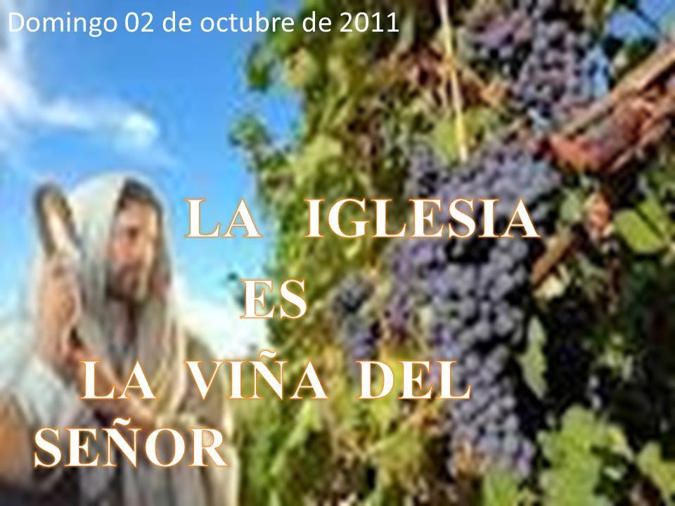 Domingo 02 de octubre de 2011 LA IGLESIA ES LA VIÑA DEL SEÑOR