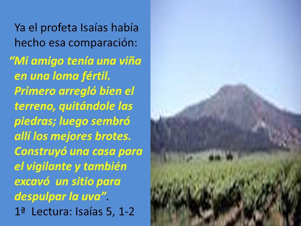 Ya el profeta Isaías había hecho esa comparación: Mi amigo tenía una viña en una loma fértil.