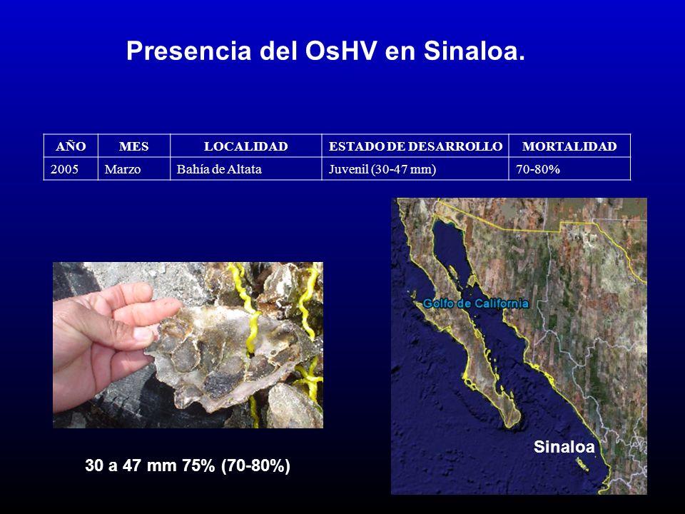 Presencia del OsHV en Sinaloa.