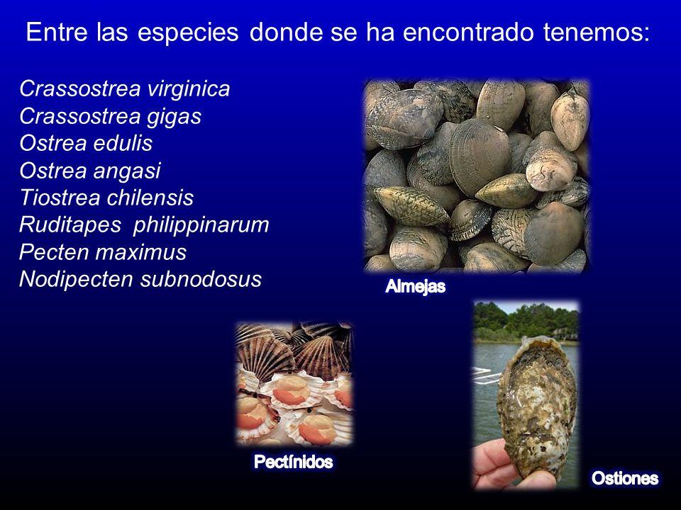 Entre las especies donde se ha encontrado tenemos: