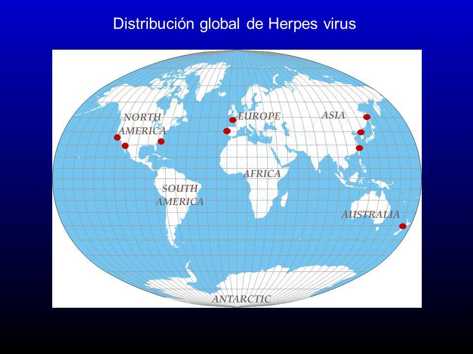 Distribución global de Herpes virus
