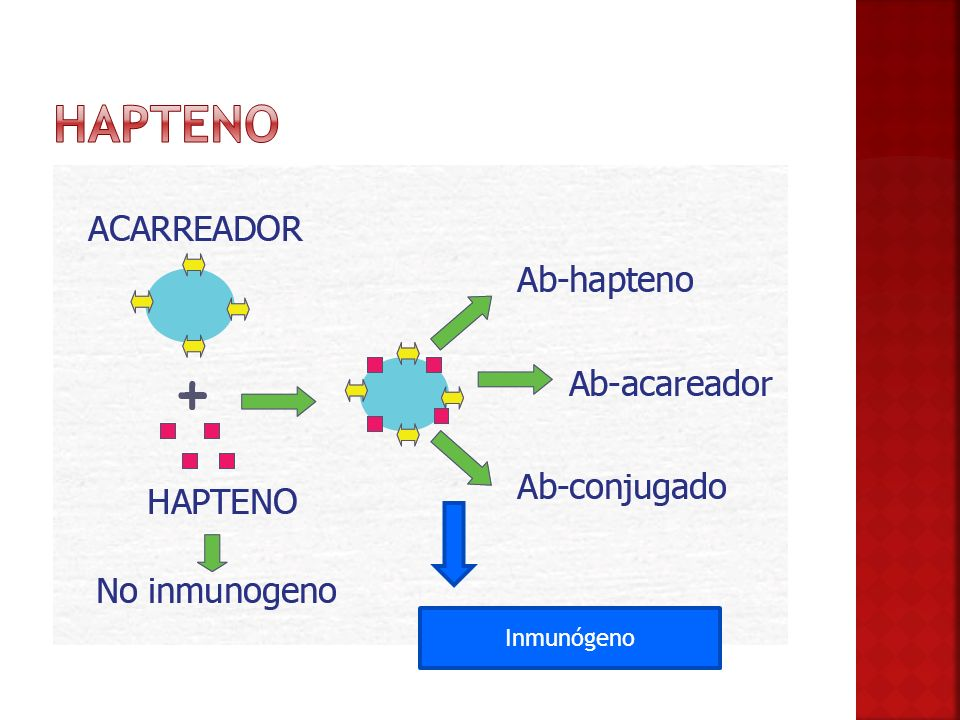 Hapteno Inmunógeno