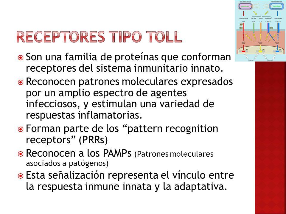 Receptores tipo toll Son una familia de proteínas que conforman receptores del sistema inmunitario innato.