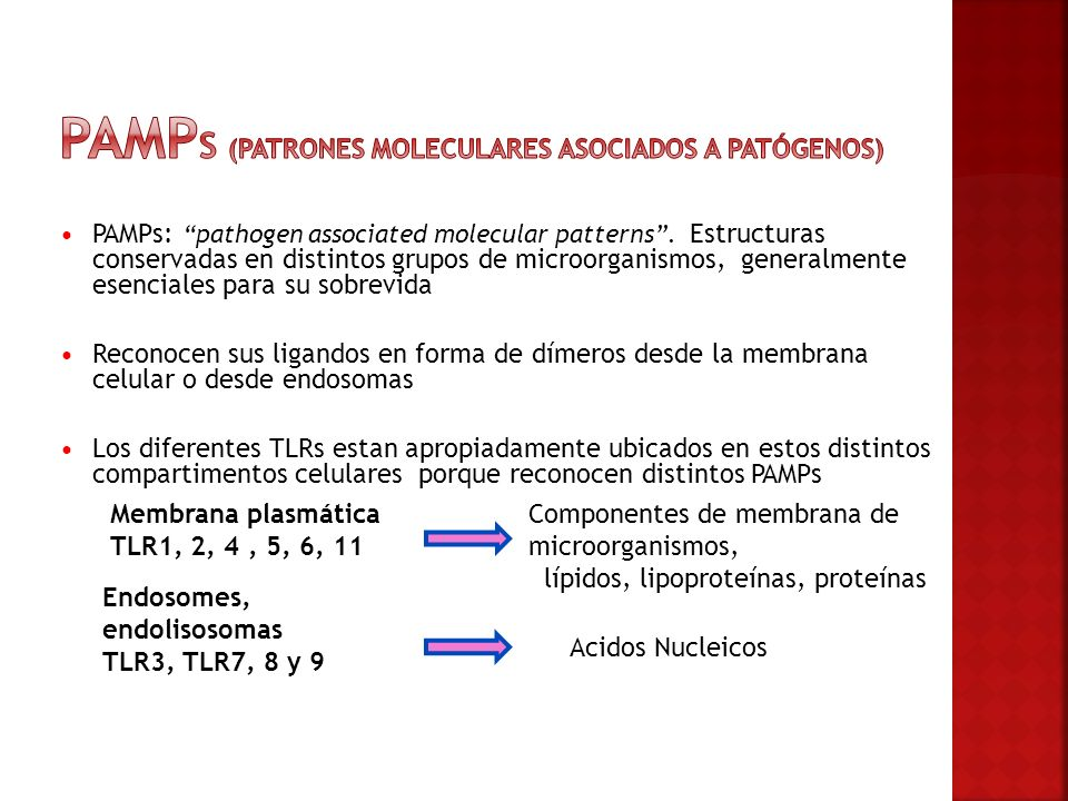 Pamps (Patrones moleculares asociados a patógenos)