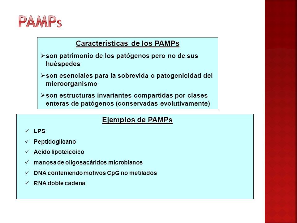 Características de los PAMPs