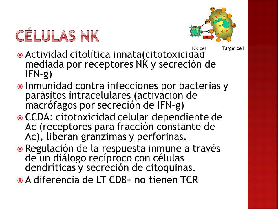 Células NK Actividad citolítica innata(citotoxicidad mediada por receptores NK y secreción de IFN-g)