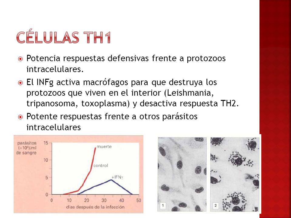 Células TH1 Potencia respuestas defensivas frente a protozoos intracelulares.
