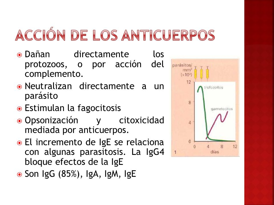 Acción de los anticuerpos