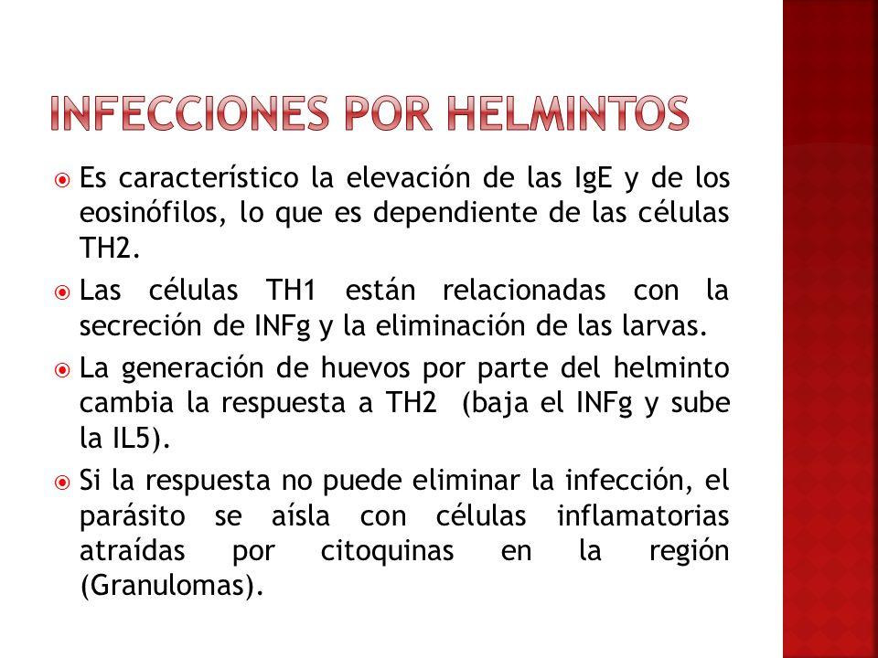 Infecciones por Helmintos