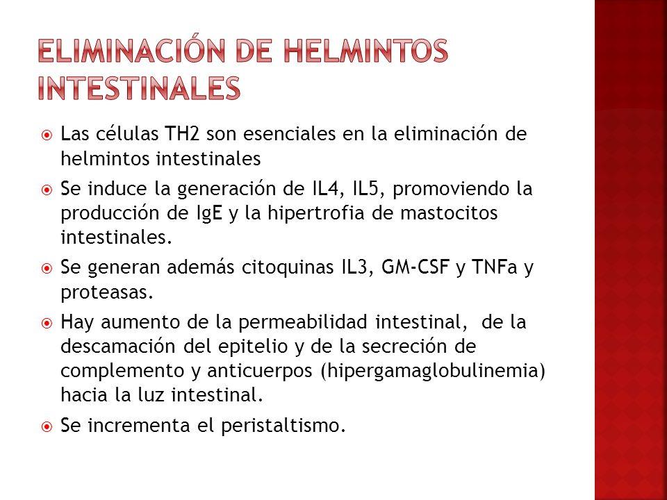 Eliminación de helmintos intestinales