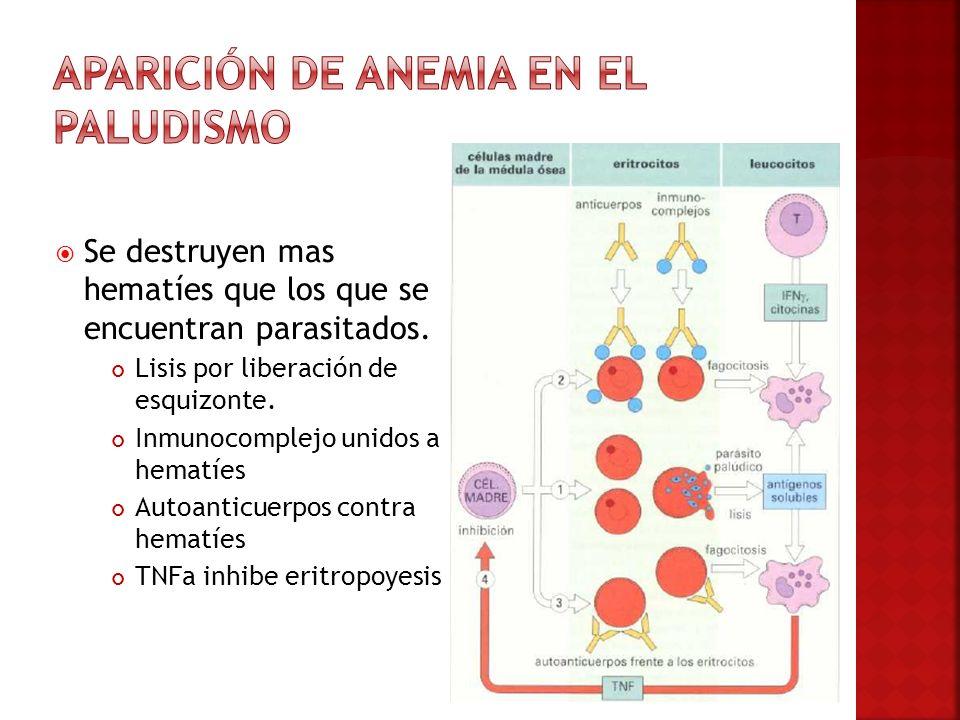 Aparición de Anemia en el paludismo