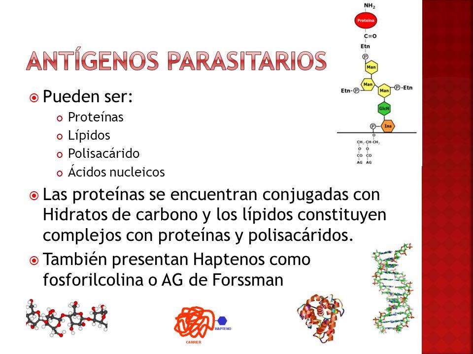 Antígenos parasitarios