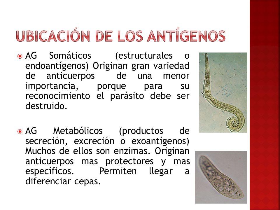 Ubicación de los antígenos
