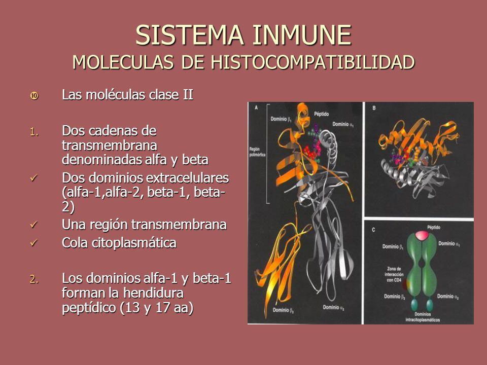 SISTEMA INMUNE MOLECULAS DE HISTOCOMPATIBILIDAD
