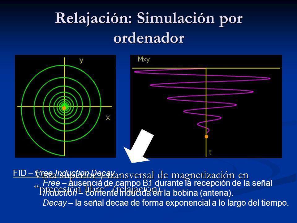 Relajación: Simulación por ordenador