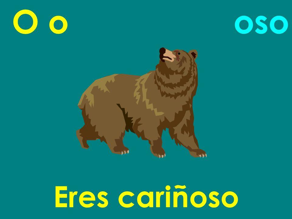 O o oso Eres cariñoso