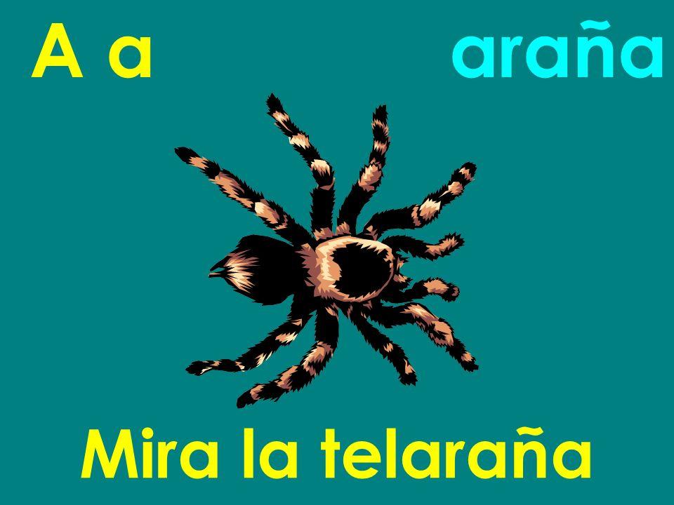 A a araña Mira la telaraña