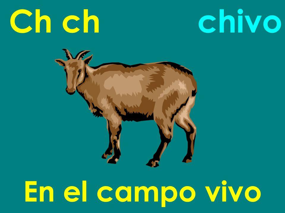 Ch ch chivo En el campo vivo