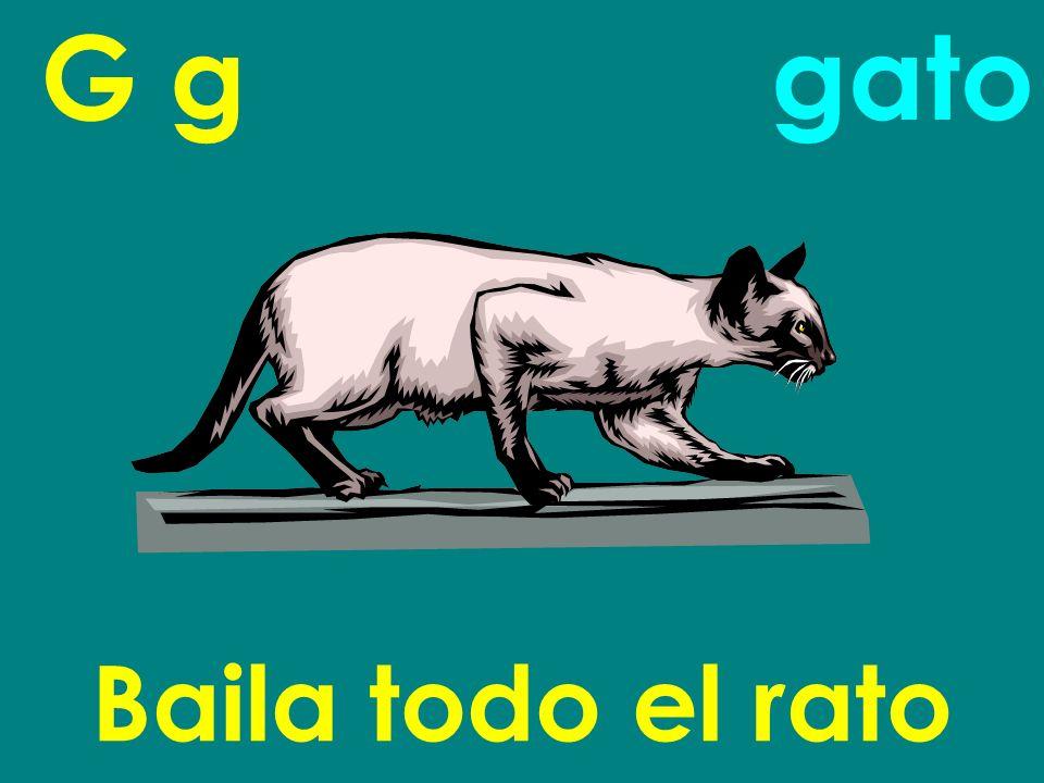 G g gato Baila todo el rato
