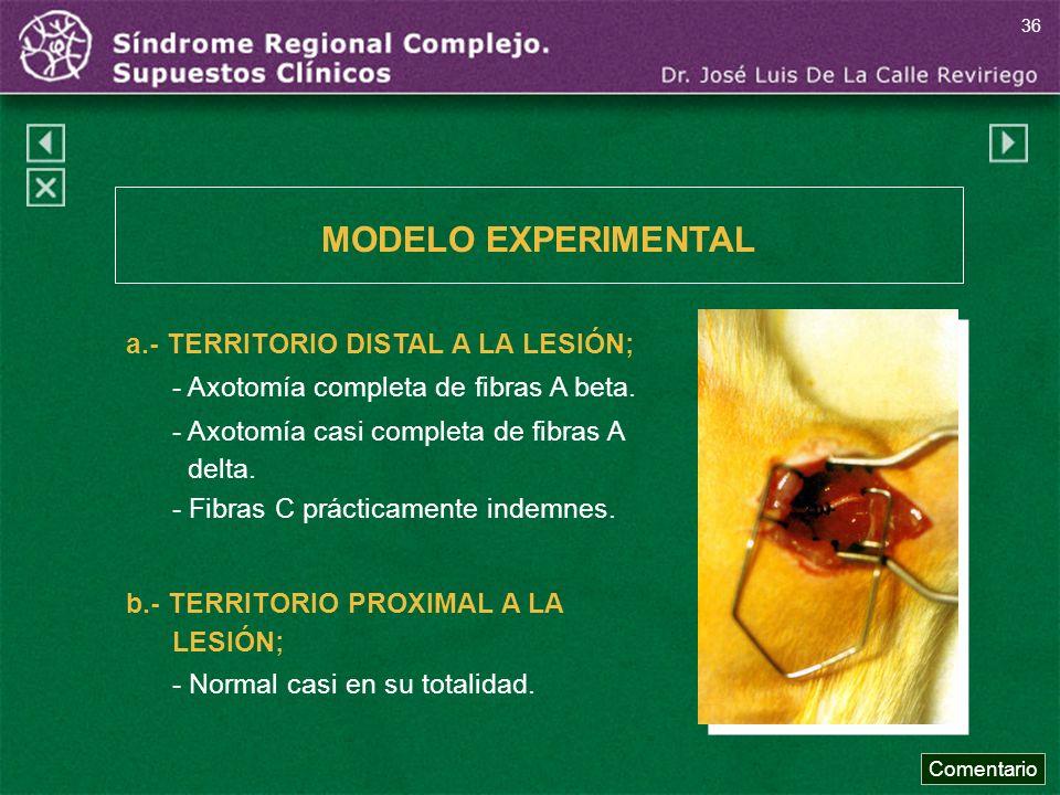 MODELO EXPERIMENTAL a.- TERRITORIO DISTAL A LA LESIÓN;
