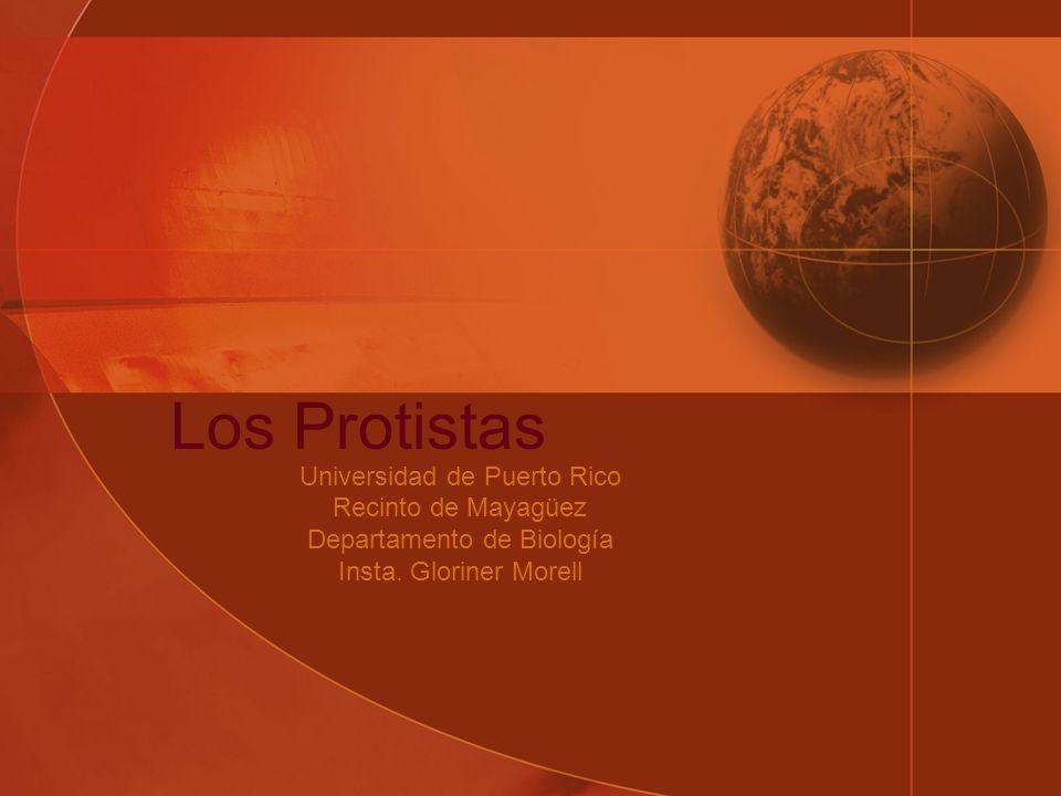 Los Protistas Universidad de Puerto Rico Recinto de Mayagüez