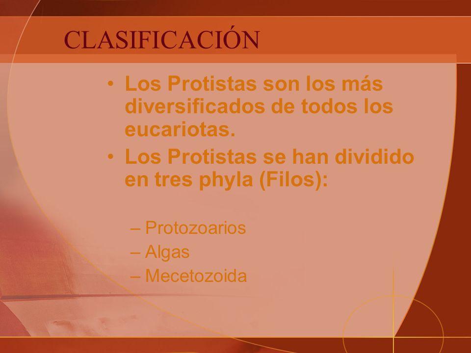 CLASIFICACIÓN Los Protistas son los más diversificados de todos los eucariotas. Los Protistas se han dividido en tres phyla (Filos):