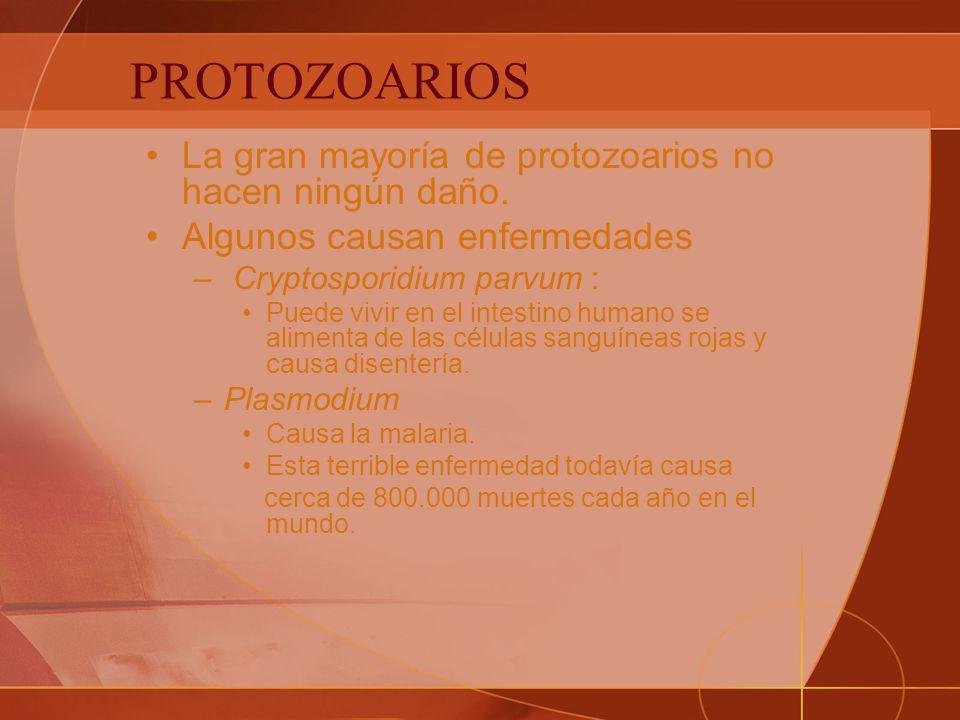 PROTOZOARIOS La gran mayoría de protozoarios no hacen ningún daño.