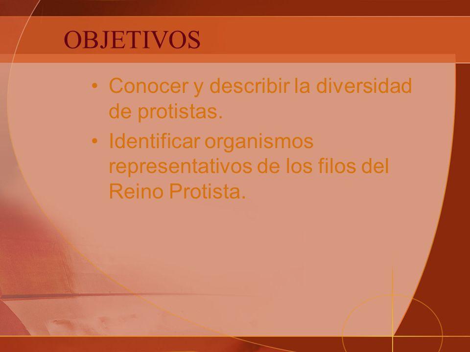 OBJETIVOS Conocer y describir la diversidad de protistas.