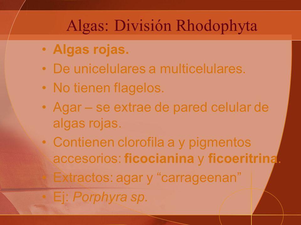 Algas: División Rhodophyta