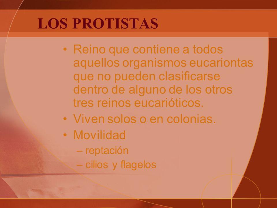 LOS PROTISTAS