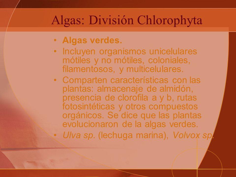 Algas: División Chlorophyta