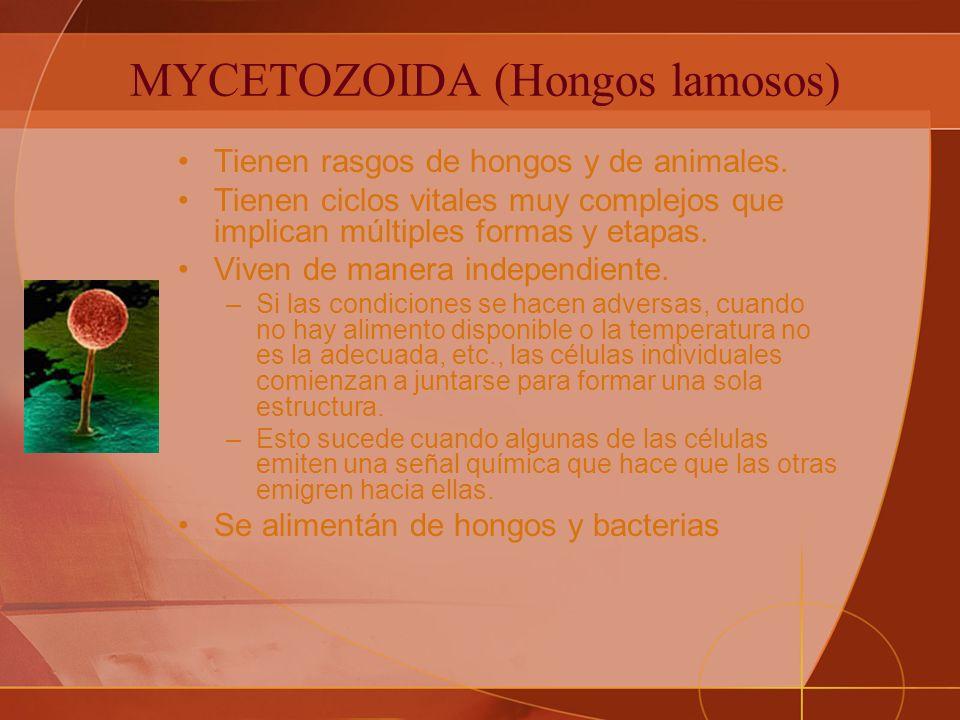 MYCETOZOIDA (Hongos lamosos)