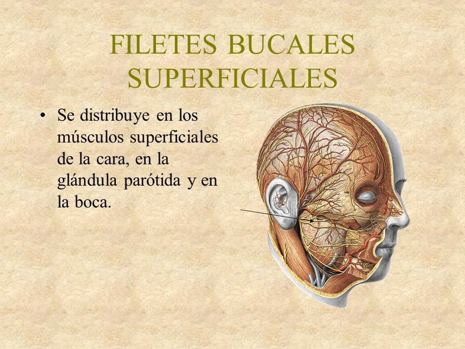 FILETES BUCALES SUPERFICIALES