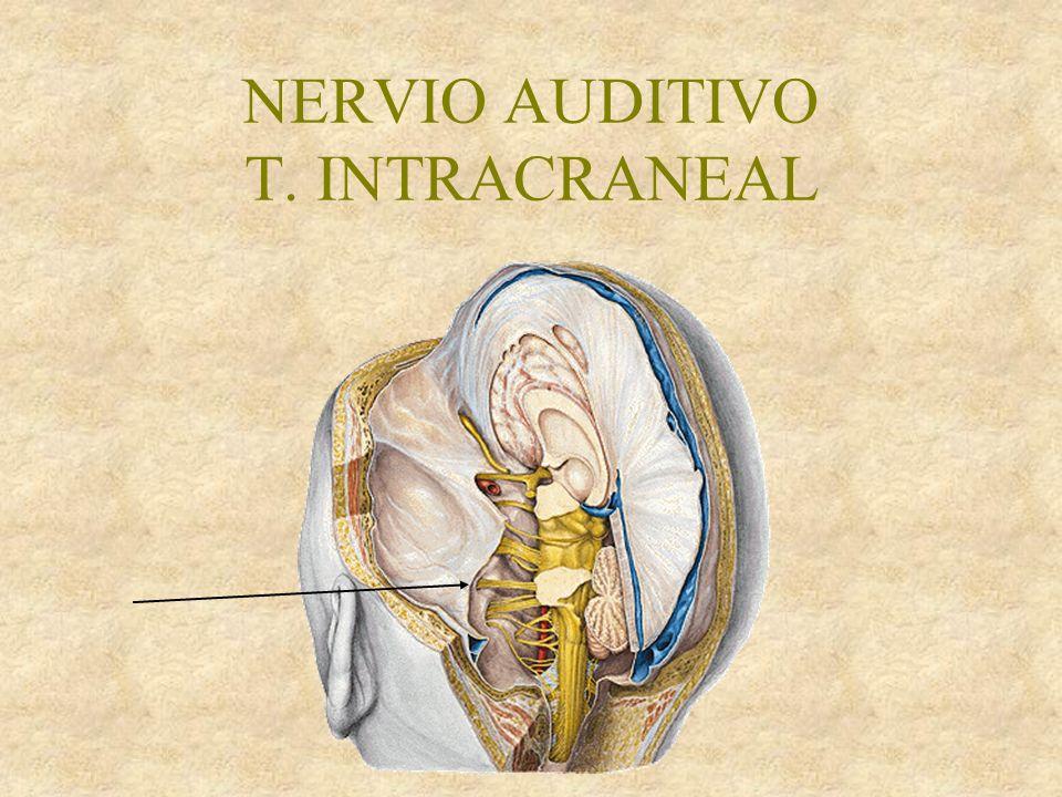 NERVIO AUDITIVO T. INTRACRANEAL