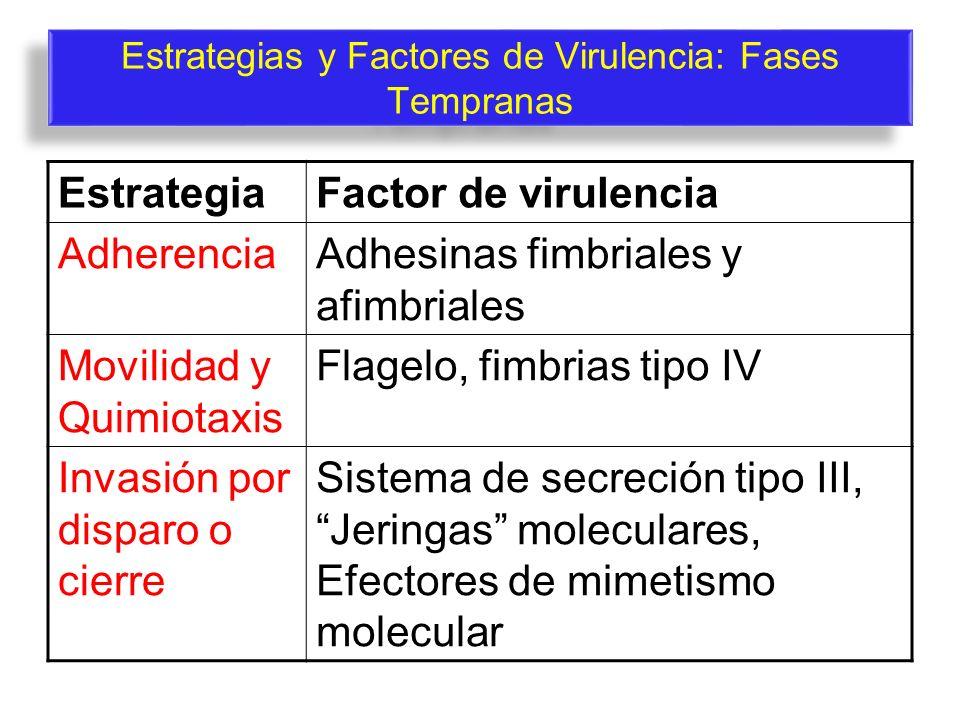 Estrategias y Factores de Virulencia: Fases Tempranas