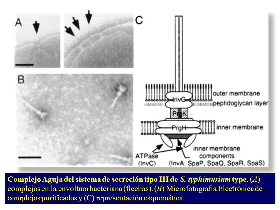 Complejo Aguja del sistema de secreción tipo III de S.