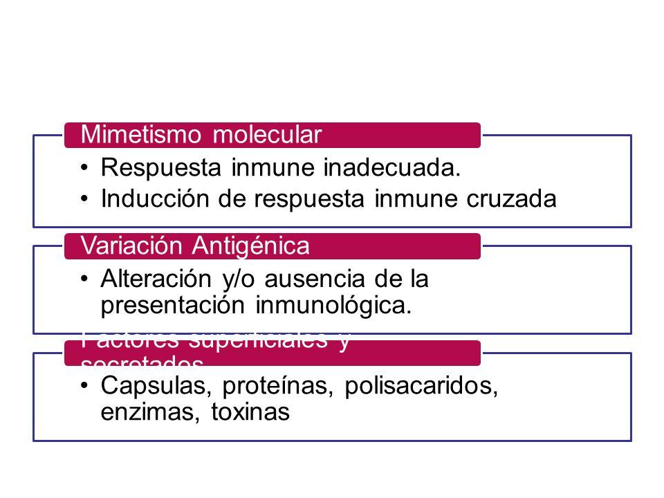 Mimetismo molecular Respuesta inmune inadecuada. Inducción de respuesta inmune cruzada. Variación Antigénica.