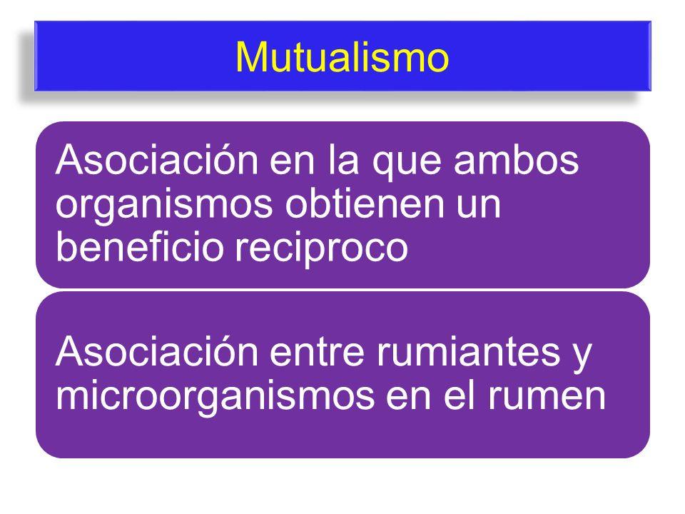 Mutualismo Asociación en la que ambos organismos obtienen un beneficio reciproco.